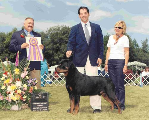 dog-breeds - R - Rottweiler - Page 10